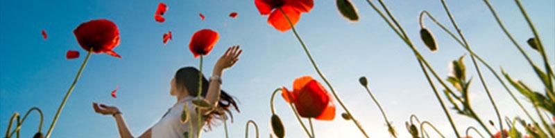 red-petals-header